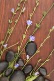 Piękni błękitni wildflowers i czerń kamienie na drewnianej powierzchni fotografia royalty free