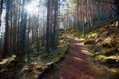 Piękni balmoral drewna zdjęcie royalty free