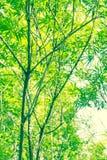 Piękni bambusów liście w lecie Zdjęcie Royalty Free