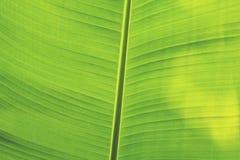 Piękni Bananowi liście z słońce połyskiem zdjęcie royalty free