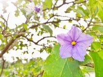 Piękni biali i fiołkowi kolorów kwiaty Fotografia Royalty Free