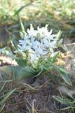 Piękni biali kwiaty na wiosna dniu obrazy royalty free