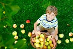 Piękni blond szczęśliwi dzieciak chłopiec łasowania i zrywania czerwoni jabłka na organicznie gospodarstwie rolnym, jesień outdoo obraz stock