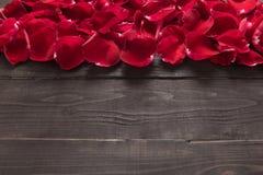 Piękni czerwieni róży płatki są na drewnianym tle Fotografia Stock