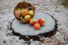 Piękni czerwoni jabłka na śnieżnym tle Obrazy Royalty Free