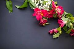 Piękni czerwoni ornamentacyjni kwiaty fotografia stock