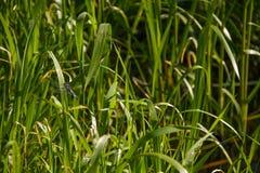 Piękni dragonflies blisko małej rzeki zdjęcia royalty free