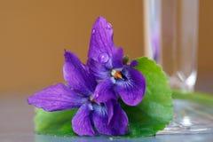 Piękni drewnianych fiołków kwiaty zamknięci w górę Altówki odorata, Słodki fiołek, Angielski fiołek obrazy royalty free