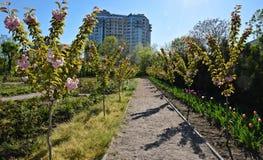 Piękni drzewa kwitnęli w ogródzie, wiosna Zdjęcie Royalty Free