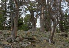 Piękni drzewa na górach zbliżają Świątobliwego Maryjnego lodowa zdjęcie royalty free