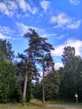 Piękni drzewa pod niebieskim niebem w Rosja w lecie zdjęcie royalty free