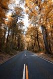 Piękni drzewa z jesień kolorami wzdłuż drogi Milford Brzmią obraz royalty free