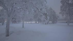 Piękni drzewa, zakrywający śniegiem w zimie zbiory wideo