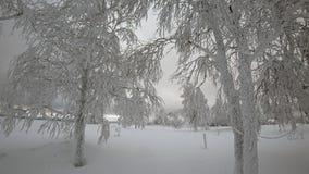 Piękni drzewa, zakrywający śniegiem w zimie zbiory