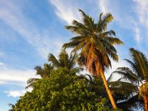 Piękni drzewka palmowe na plaży losu angeles Digue wyspa Fotografia Royalty Free