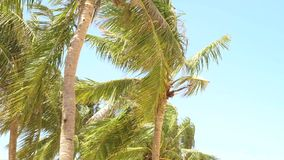 Piękni drzewka palmowe na tropikalnej wyspie w oceanie Lat krajobrazowi kokosowi drzewka palmowe na morzu wyrzucać na brzeg na ni zbiory wideo