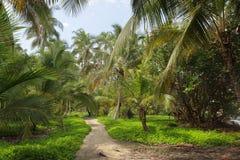 Piękni drzewka palmowe w Tayrona naturalnym kurorcie fotografia royalty free