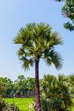 Piękni drzewka palmowe z bławym nieba i zieleni tłem zdjęcia stock