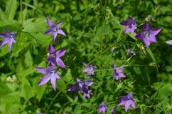 Piękni dzwonkowi kwiaty w słonecznym dniu zamykają w górę obraz stock