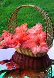 Piękni gladiolusy są w łozinowym koszu Zdjęcie Royalty Free