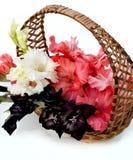Piękni gladiolusy są w łozinowym koszu Zdjęcie Stock