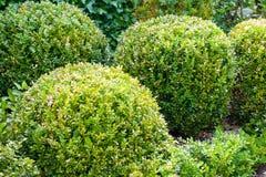 Piękni grodowi ogródy Villandry w Loire Francja Zdjęcie Royalty Free