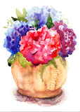 Piękni hortensi czerwieni kwiaty Obrazy Stock