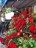 piękni i jaskrawi kwiaty na tarasach Lviv kawiarnia fotografia stock