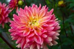 Piękni jesień kwiaty Zdjęcia Stock