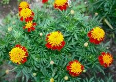 Piękni jesień kwiaty Zdjęcia Royalty Free