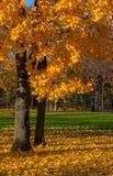 Piękni jesieni drzewa. Jesień krajobraz. Fotografia Stock