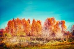 Piękni jesieni drzewa, trawa przy nieba tłem i, plenerowa spadek natura Zdjęcie Royalty Free