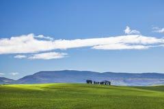 Piękni kołysanie się zieleni pola i drzewna linia z górami w odległości z niebieskim niebem i cluds Caledon, Zachodni przylądek,  obraz royalty free