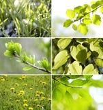 piękni kolekci zieleni liście Zdjęcia Stock