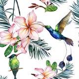 Piękni kolorowi colibri i menchii plumeria kwiaty na białym tle Egzotyczny tropikalny bezszwowy wzór Watecolor obraz ilustracja wektor