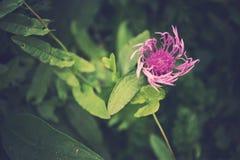 Piękni kolorowi kwiaty na ciemnym tle w lat dziąsłach Obrazy Royalty Free