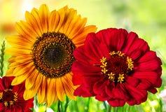 Piękni kolorowi kwiaty w polu, naturalny tło Fotografia Royalty Free