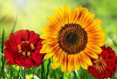 Piękni kolorowi kwiaty w polu, naturalny tło Obraz Stock