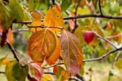 Piękni Kolorowi liście Obraz Stock