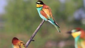 Piękni kolorowi ptaki siedzi na gałąź zdjęcie wideo