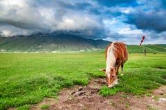 Piękni konie w dolinie blisko Castelluccio, Umbria fotografia stock