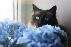 Piękni kota i błękita kwiaty obrazy royalty free