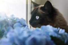 Piękni kota i błękita kwiaty fotografia stock
