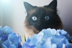 Piękni kota i błękita kwiaty obraz royalty free