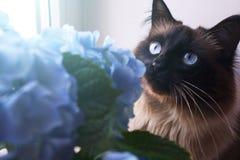 Piękni kota i błękita kwiaty zdjęcia royalty free