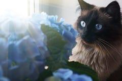 Piękni kota i błękita kwiaty zdjęcia stock