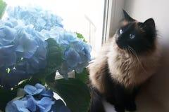 Piękni kota i błękita kwiaty zdjęcie stock