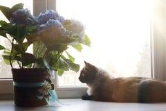 Piękni kota i błękita kwiaty na okno fotografia stock