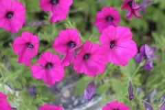 Piękni kwiatów pączki Obraz Stock
