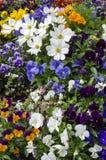 Natura - kwiaty lato royalty ilustracja